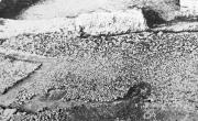 Pavimento a ciottoli da Altintepe (da SALZMANN 1982, https://mosaicodiciottoli.wordpress.com)